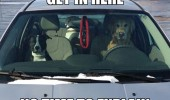 dogs animals sitting car no time explain get in funny pics pictures pic picture image photo images photos lol