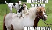 dogs sitting back animal no time explain get on horse funny pics pictures pic picture image photo images photos lol