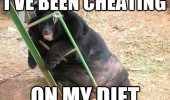 fat bear animal cheating diet funny pics pictures pic picture image photo images photos lol
