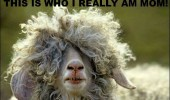 fluffy sheep hair cut animal this who really am mom funny pics pictures pic picture image photo images photos lol