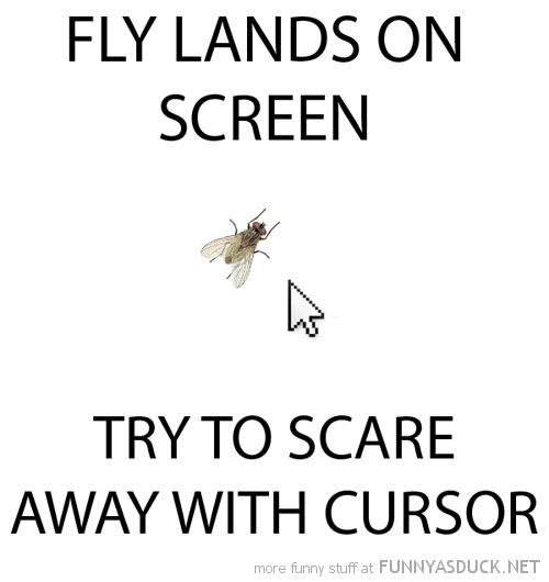 fly lands screen try scare away with cursor funny pics pictures pic picture image photo images photos lol