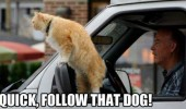 follow that dog animal cat car mirror funny pics pictures pic picture image photo images photos lol