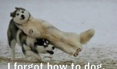 forgot how to dog animal running snow fall funny pics pictures pic picture image photo images photos lol
