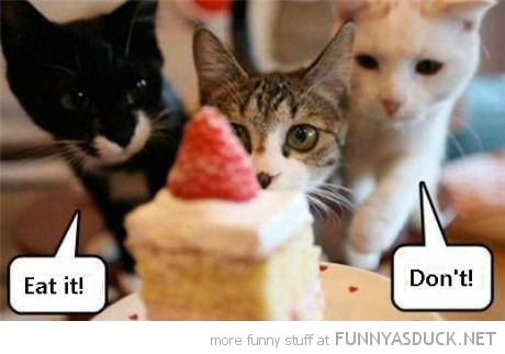 good evil cats kittens animals lolcats cake eat it don't funny pics pictures pic picture image photo images photos lol