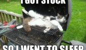 i got stuck cat lolcat animal stuck bbq went to sleep baby bird owl dangerous go alone take this zelda funny pics pictures pic picture image photo images photos lol