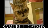 grumpy angry cat lolcat animal pulp fiction samuel l catson funny pics pictures pic picture image photo images photos lol