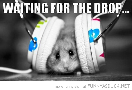hamster animal headphones waiting for the drop funny pics pictures pic picture image photo images photos lol