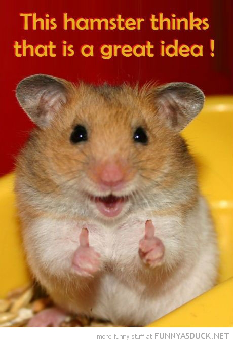 hamster animal thumbs up thinks great idea funny pics pictures pic picture image photo images photos lol