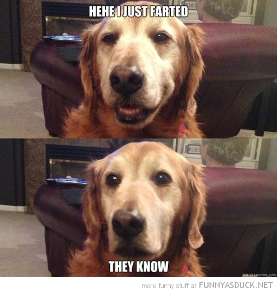 happy dog animal just farted they know funny pics pictures pic picture image photo images photos lol