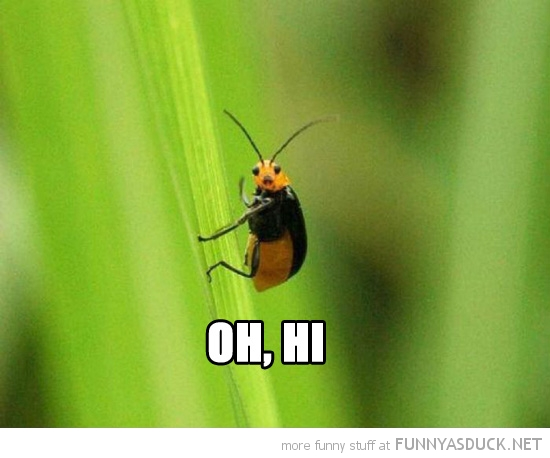 happy waving bug insect smiling animal oh hi grass funny pics pictures pic picture image photo images photos lol