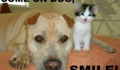 happy smiling kitten cat lolcat come on dog smile animal funny pics pictures pic picture image photo images photos lol