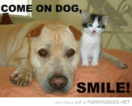 happy smiling kitten cat lolcat come on dog smile animal funny pics ... Smiling Dog And Cat