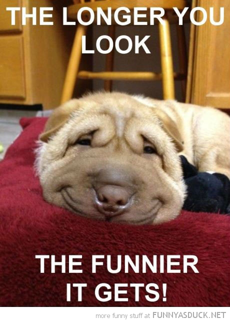 happy smiling dog animal longer look funnier it gets funny pics pictures pic picture image photo images photos lol