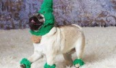haters gonna hate dog pug animal costume hat funny pics pictures pic picture image photo images photos lol
