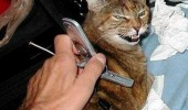 hello yes this is cat lolcat animal mobile phone funny pics pictures pic picture image photo images photos lol
