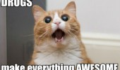 high wasted cat lolcat animal drugs make everything awesome funny pics pictures pic picture image photo images photos lol