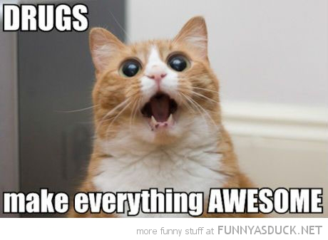 funny-high-wasted-cat-drugs-make-everyth