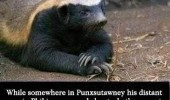 honey badger dat don't give a shit funny pics pictures pic picture image photo images photos lol