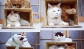how to catch cats carboard box animal lolcat funny pics pictures pic picture image photo images photos lol
