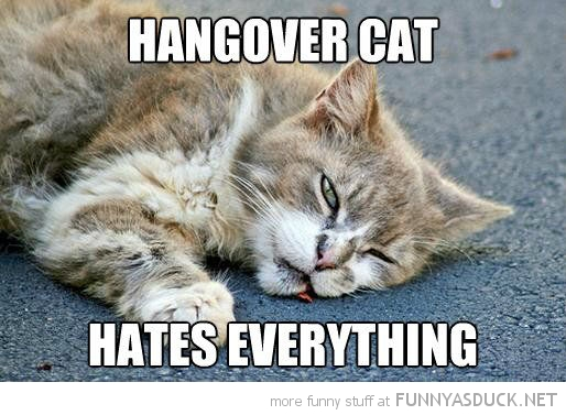 hangover cat lolcat animal lying ground hates everything baby bird owl dangerous go alone take this zelda funny pics pictures pic picture image photo images photos lol
