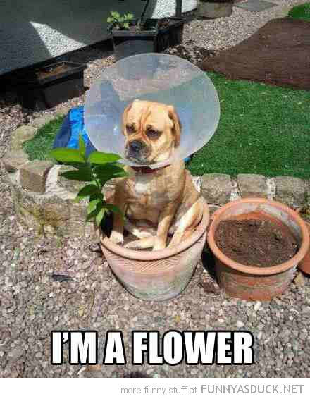 dog animal cone head sitting pot i'm a flower funny pics pictures pic picture image photo images photos lol