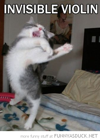 cat kitten lolcat animal jumping invisible violin funny pics pictures pic picture image photo images photos lol