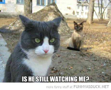 cat lolcat animal is he still watching me funny pics pictures pic picture image photo images photos lol