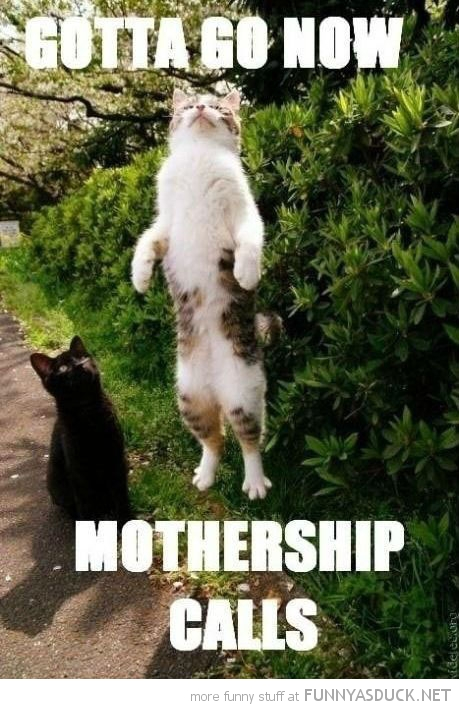 jumping cat lolcat animal must go mothership calls funny pics pictures pic picture image photo images photos lol
