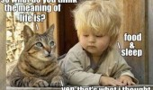 kid cat lolcat animal boy meaning life food sleep funny pics pictures pic picture image photo images photos lol