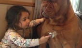 kid girl doctor vet stethoscope dog animal sorry barkinsons funny pics pictures pic picture image photo images photos lol