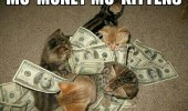 kittens cats lolcats dollar bills mo money funny pics pictures pic picture image photo images photos lol