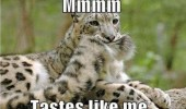 leopard biting tail animal tastes like me funny pics pictures pic picture image photo images photos lol