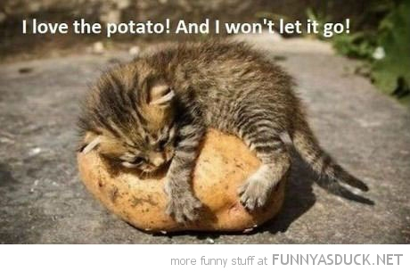 cat lolcat animal hugging potato love this won't let go funny pics pictures pic picture image photo images photos lol
