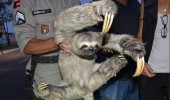 man holding animal claws no match for my sloth fu funny pics pictures pic picture image photo images photos lol