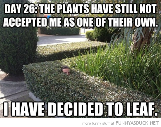 man in hedge not accepted me decided to leaf pun joke funny pics pictures pic picture image photo images photos lol