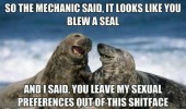 mechanic said blew seal laughing animals pun joke funny pics pictures pic picture image photo images photos lol
