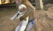 monkey animal running holding dog no time to explain take funny pics pictures pic picture image photo images photos lol