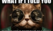morpheus matrix cat lolcat animal what if told you red dot controlled humans funny pics pictures pic picture image photo images photos lol