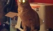 must go evil afoot cat lolcat animal glowing yellow eyes funny pics pictures pic picture image photo images photos lol