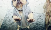 dog animal wearing jacket door whoa need see id funny pics pictures pic picture image photo images photos lol