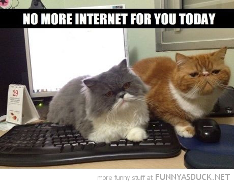 cats lolcats animals sitting keyboard computer no more internet today funny pics pictures pic picture image photo images photos lol