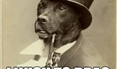 old money dog animal red carpet wipe assmeme  funny pics pictures pic picture image photo images photos lol