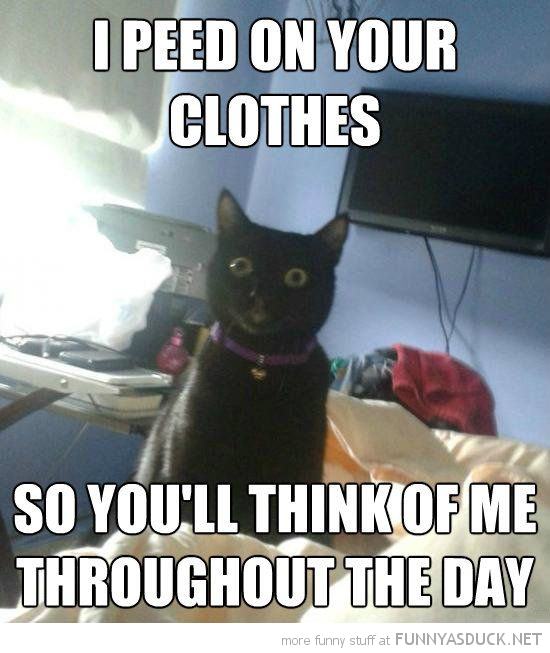 overly attached cat lolcat animal peed clothes think of me day funny pics pictures pic picture image photo images photos lol