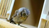 owl looking about around bird the fuck is that this you funny pics pictures pic picture image photo images photos lol