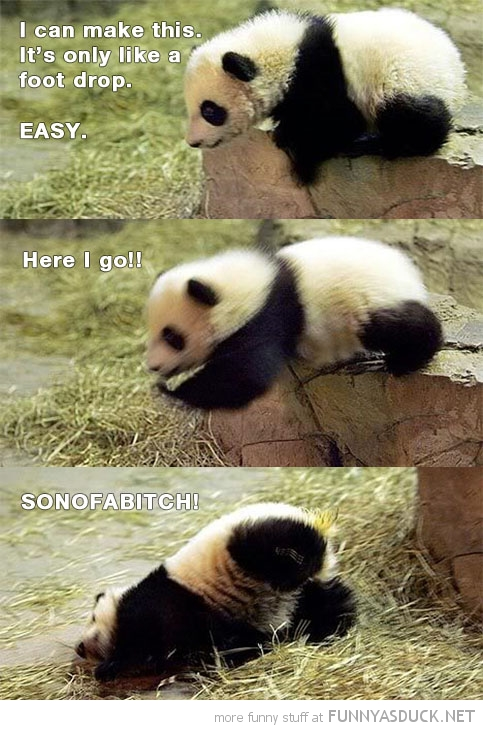 panda bear animal falling rock make this just foot funny pics pictures pic picture image photo images photos lol