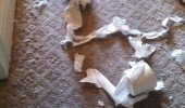 parrot ripped animal bird toilet roll paper just exploded surprised funny pics pictures pic picture image photo images photos lol