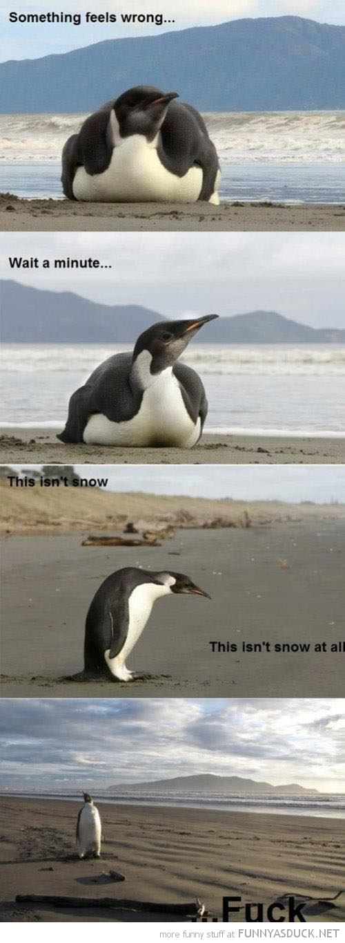 penguin bird lost beach not snow something wrong animal funny pics pictures pic picture image photo images photos lol