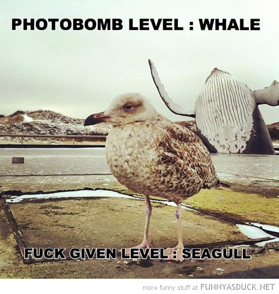 whale animal photobomb level fucks given seagull bird funny pics pictures pic picture image photo images photos lol