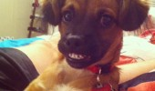 photogenic dog animal smiling happy ladies funny pics pictures pic picture image photo images photos lol