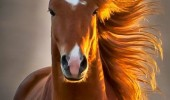 photogenic horse animal maybe born with it neigh-belline funny pics pictures pic picture image photo images photos lol